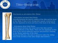 Tibio-fibular_joint-整骨培訓課件