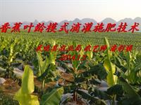 香蕉叶龄模式肥水一体化技术潘彩楼