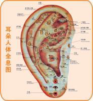 耳朵全息图