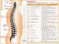 脊椎全息图
