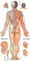针灸穴位挂图-男-背面经穴图