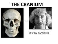 The cranium system-整骨培训课件