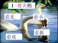 《看天鹅》ppt课件2015秋沪教版语文一年级上册